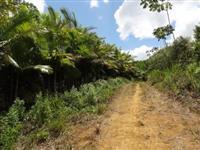 Fazenda de 100Ha na região  Valença-Ba