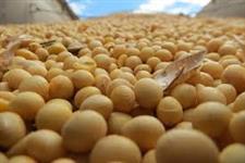 SOJA GMO #2