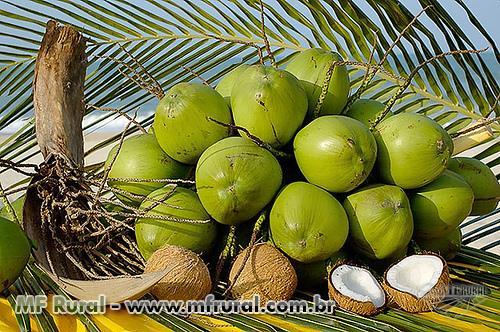 Coco Verde – VENDA