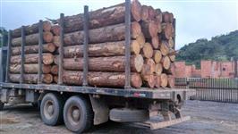 Compro toras de eucalipto saligna e pinus de 30cm acima