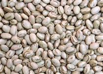 Venda de lotes de feijão carioca