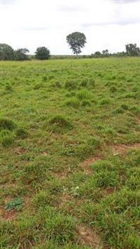 Fazenda 3960 hect a 130 km da capital palmas munic rio sono próximo cidade novo acordo