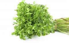 Coentro - Cheiro verde - Orgânico