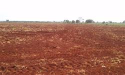 Fazenda para lavoura, soja, milho e pecuária, caseara Tocantins, 1.092 alqueirões