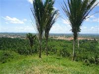 Fazenda 169 hectares