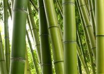 Vendo bambus