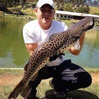 Procuro fornecedor de peixes para pesqueiros em SP