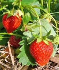 Slab para cultivo de plantas
