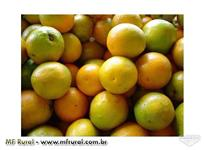 distribuidora de laranja