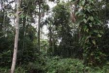 Possuo Gleba de terras em Eldorado paulista