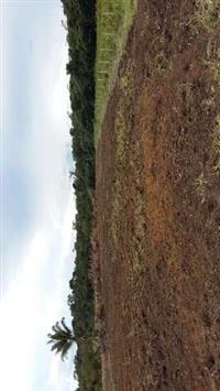 Fazenda 80 km de Porto Velho