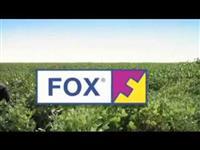 FOX FUNGICIDA