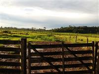 fazenda castanheira