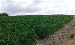 fazenda a venda 730 hectares para soja rs