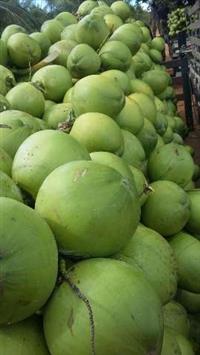 Coco verde carga fechada para todo brasil