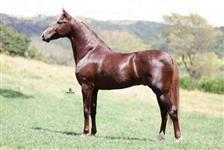 cavalo mangalarga campeao brasileiro