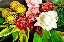 Flores e Folhagens Tropicais