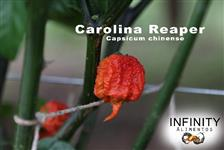 Pimenta Carolina Reaper FRUTOS in natura,a pimenta mais ardida do mundo