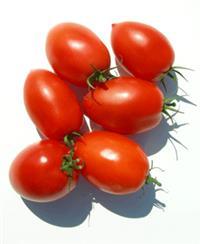 procuro parceria para plantio tomate rasteiro e sweet grape