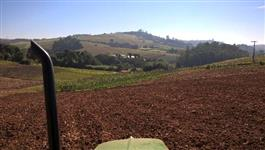 procuro parceria plantio tomate rasgeiro e sweet grape