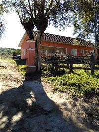 Arrendamento de Fazenda de 135 ha na Barra do Ribeiro