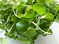 Verdura Orgânica (Rúcula e Agrião)
