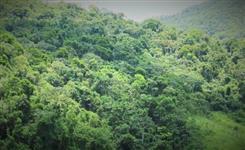 Area para compensação ambiental