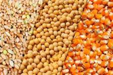 casquinha de soja 16% farelo 46% milho soja