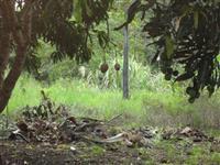 Vende-se chácara na Fazenda Boa Esperança em Valença -BA (PARAÍSO DAS ÁGUAS)