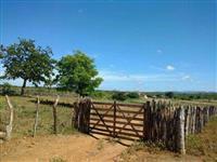 Fazenda a venda em Serra Talhada  PE ,214 hectares
