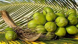 Tenho coco verde de ótima qualidade em grande quantidade