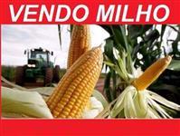 Vendo Milho a Granel Disponível 20.000 sacos