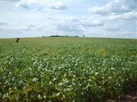 Fazenda de Agricultura em Amanbai/MS