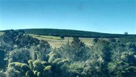Fazenda no sul de minas Café e gado Raridade