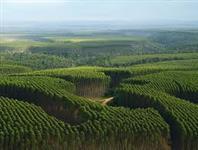 Compramos Florestas / Fazendas de Eucalipto em Minas Gerais