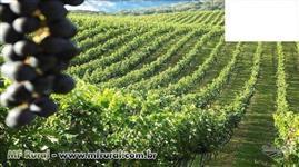 Vinícola com marca própria em Fazenda Souza (RS)