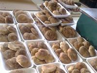 Vendo Cogumelo Shiitake