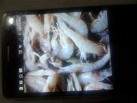 camarão nosso