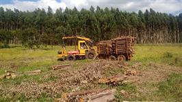 Groa Florestal