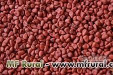 compro semente de urucum  avista