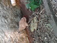 Ovos orgânicos caipira