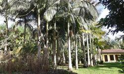 intermediario vendo chacara 20.000 pes de pinus e 2000 de eucalipitus urgente 11 alqueres com casa