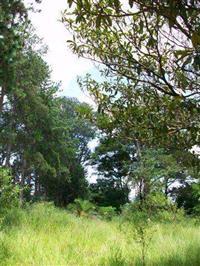 Fazenda � venda, pecu�ria de corte, reflorestamento
