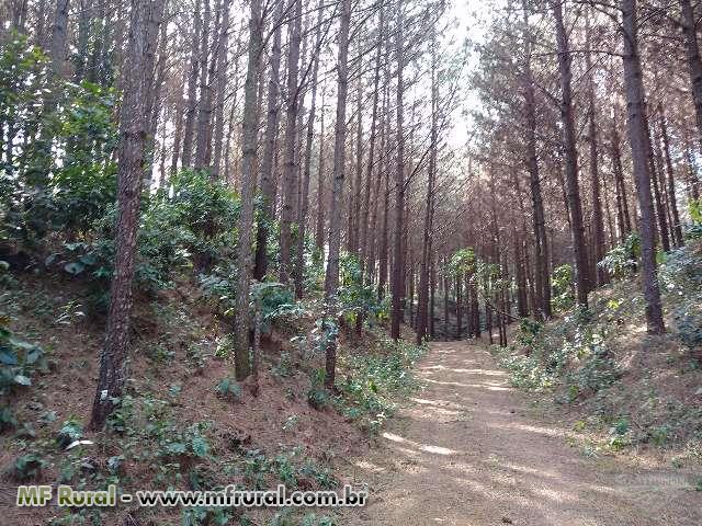 Arrendamento de Floresta