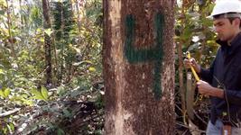 VENDA DE TECA - PLANTIO COM 17 ANOS