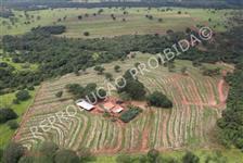 Fazenda 47 alqs Paulista.