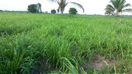 Fazenda 720 Alqueires, Breu branco.  Tucuruí/Pará