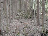 Cavaco (Woodship) de Eucalipto