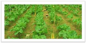 Verduras de Alta Qualidade