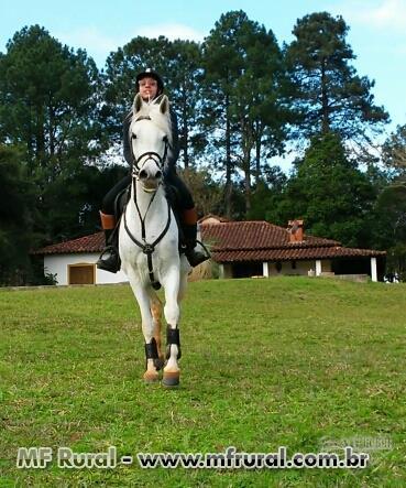 Cavalos de hipismo a venda em curitiba